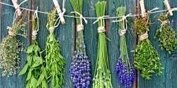 Čas sklizně: Jak a kdy sklízet domácí bylinky?