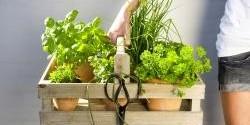 Jak uchovat bylinky pro pozdější spotřebu? Poradili v Polopatě