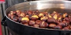 Jedlé kaštany - pečené nebo snad v nádivce?