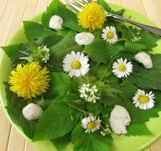 Divoké bylinky neboli plevel ze zahrady na našem jídelníčku!