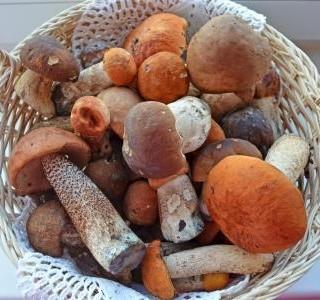 Houbová sezóna je tady! Co sbírat v září a jak houby zužitkovat