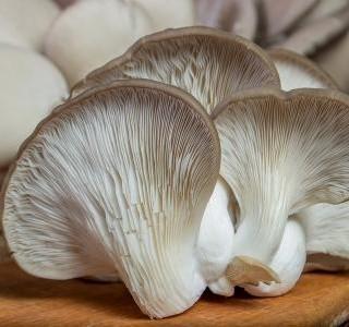 Hlíva ústřičná a houba shiitake vás překvapí